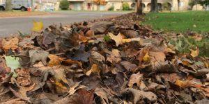 City's Fall ReLeaf Program to Begin October 29